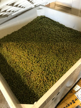 Weighing Marsanne & Roussanne