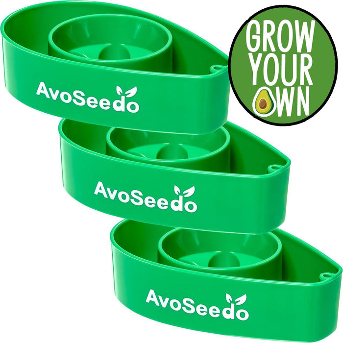 AvoSeedo DIY Green Avocado Tree Growing Bowls: 3 Pack