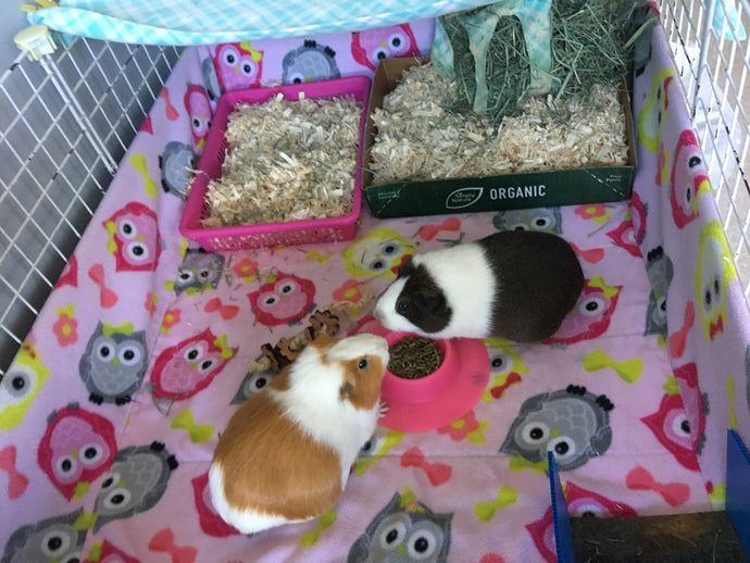 Wondering how to keep your guinea pig fleece bedding cage clean and fresh? Here are our top 5 pro tips!!