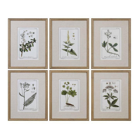 Uttermost Green Floral Botanical Study Prints - Set of 6