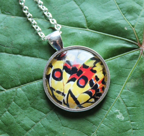 Yellow and Red Butterfly, Butterfly Pendant Necklace, Silver Neckalce, Butterfly Wing Necklace, Picture Pendant of Wing, Entomology Necklace