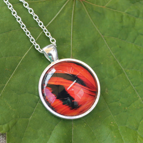 Tiger Butterfly Wing, Butterfly Pendant Necklace, Silver Necklace, Butterfly Wing Necklace, Picture Pendant of Wing, Entomology Necklace