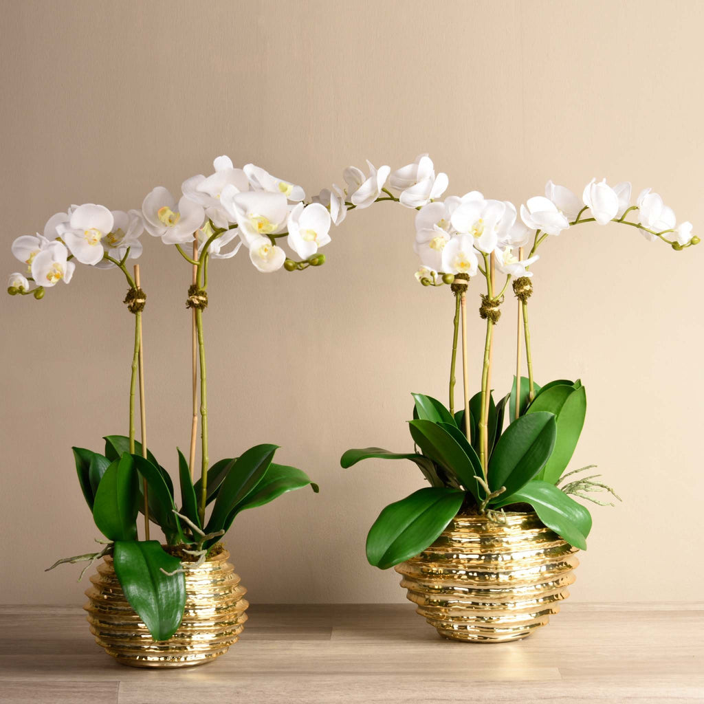 bloomr-usa Flowers Medium / White Majestic Orchid Arrangement artificial flowers artificial trees artificial plants faux florals