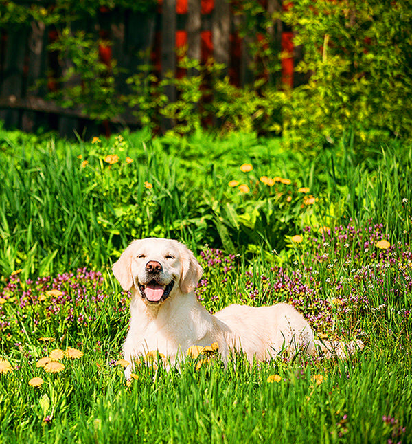 Herbs for a Healthy Dog Seed Collection