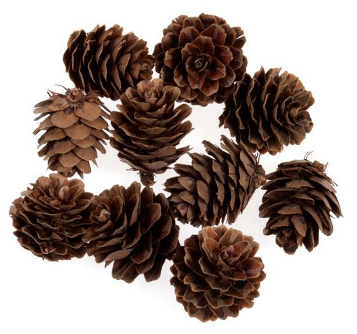 10 Mini  Natural  Pine Cones