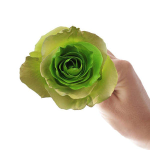 green colar roses delivery