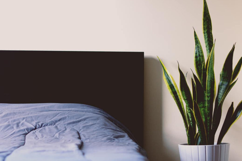 Cleaner Indoor Air Quality Can Help You Sleep Better