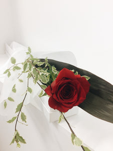Valentines Single Rose Presentation Box delivery Coolum