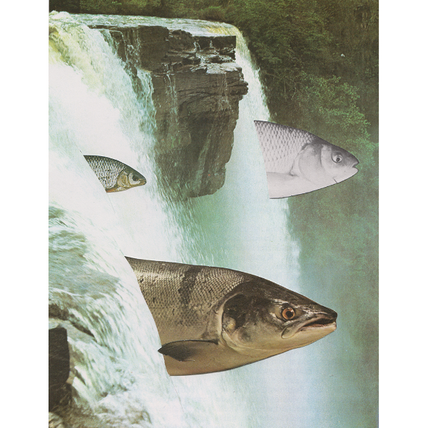"""So Long and Thanks for all the Fish"" by Sophia Van Der Meijden, Paper Collage"