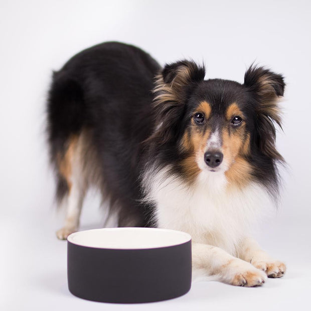 Anti-Bacterial Natural Cooling Dog Water Bowl in Ebony - This Dog's Life