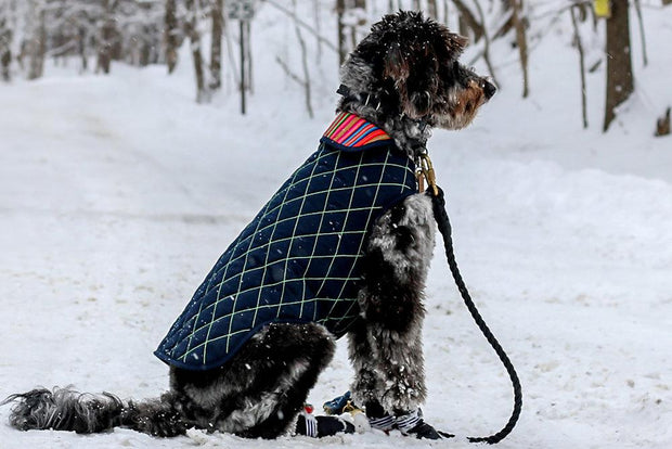 Peruvian Dog Jacket with Faux Lambswool Lining in Navy and Emerald - This Dog's Life