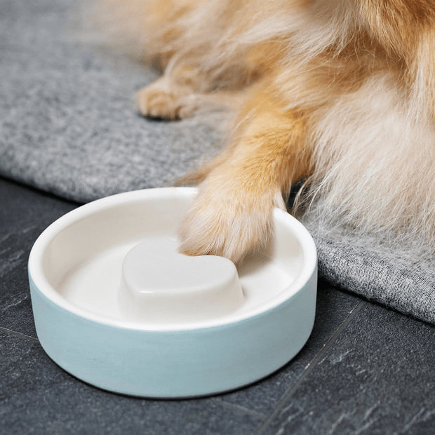 Dental Care Ceramic Dog Bowl in Blue Heaven - This Dog's Life