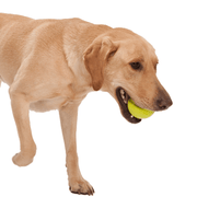 Non-Toxic Ball and Bone Toy Super Pack - This Dog's Life
