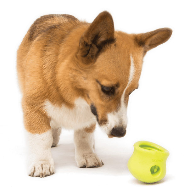 Non-Toxic Tough Puzzle and Treat Pack for Problem Solving - This Dog's Life