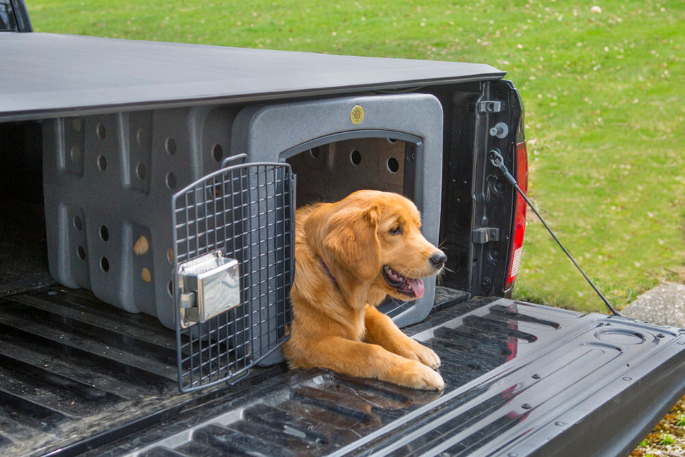 Dakota283 T1 Kennel