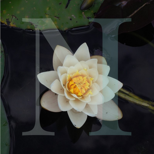 Lotus Flower Candle, Bath & Body Fragrance Oil