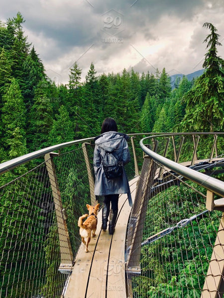 Capilano Suspension Bridge with Dog