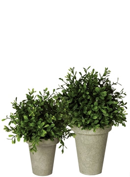 Boxwood Potted Orbs