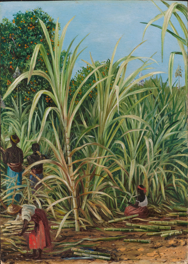 Detail of 45. Harvesting the sugar cane in Minas Geraes, Brazil, 1880 by Marianne North