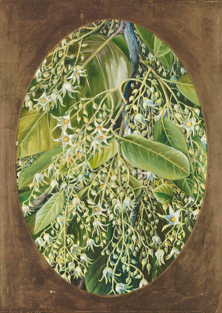 Detail of 296. Flowers of Sal. by Marianne North