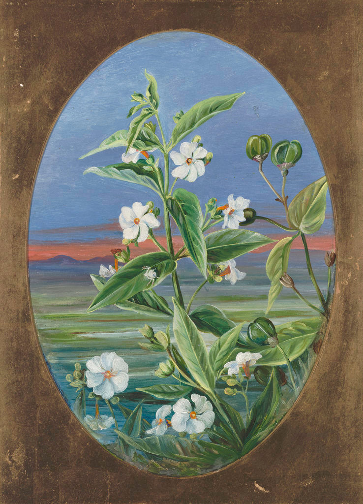 Detail of 307. The Night Jessamine. by Marianne North