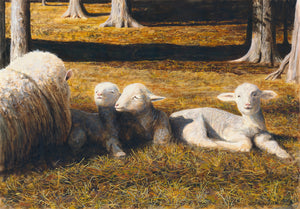 Thomas Clements Painting of a Columbia Sheep laying in a pasture with three young Triplet Lambs, on a sunny day Giclée Print.