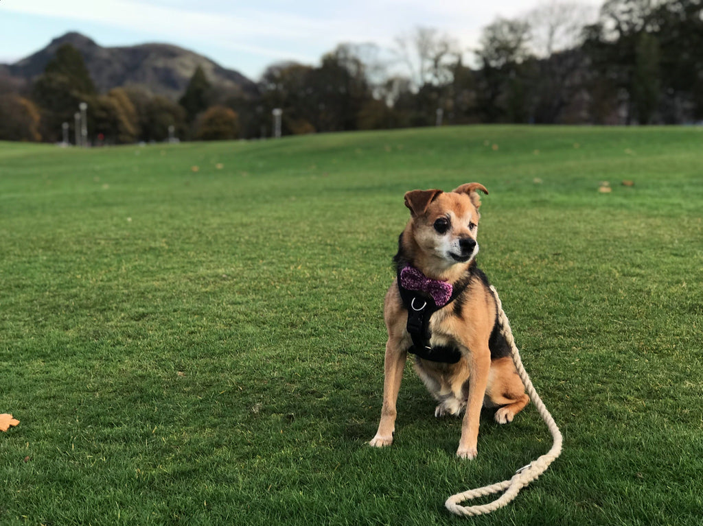 A dog friendly afternoon in Bruntsfield