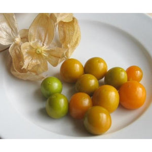 Poha Berry-Cape Gooseberry