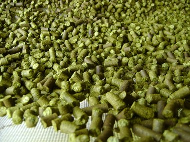 2017 Chinook Hops - Dried, Pelleted
