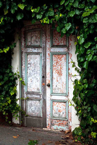 Square Wood Door With Green Leaves Backdrop For Photography
