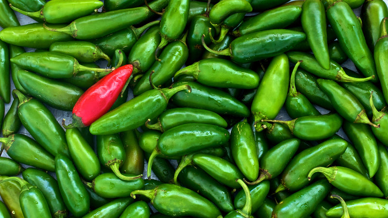 Top Tips For Growing Chili Peppers