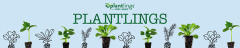 Plantlings Baby Plants