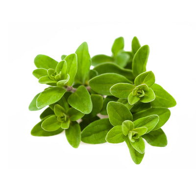Marjoram - Organic Essential Oil