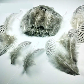 100pcs/lot 7-11cm, 3-4in Top Quality White Silver Pheasant Feathers Craft Jewelry Cosplay Accessories