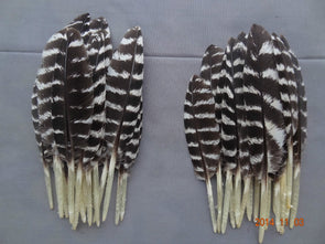 New! Hot! 100Pcs/lot! 5-10cm Wild Turkey Small Quill Feathers