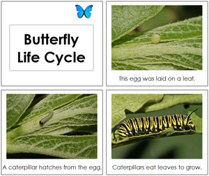 Butterfly Life Cycle Book - Toddler - Montessori Print Shop