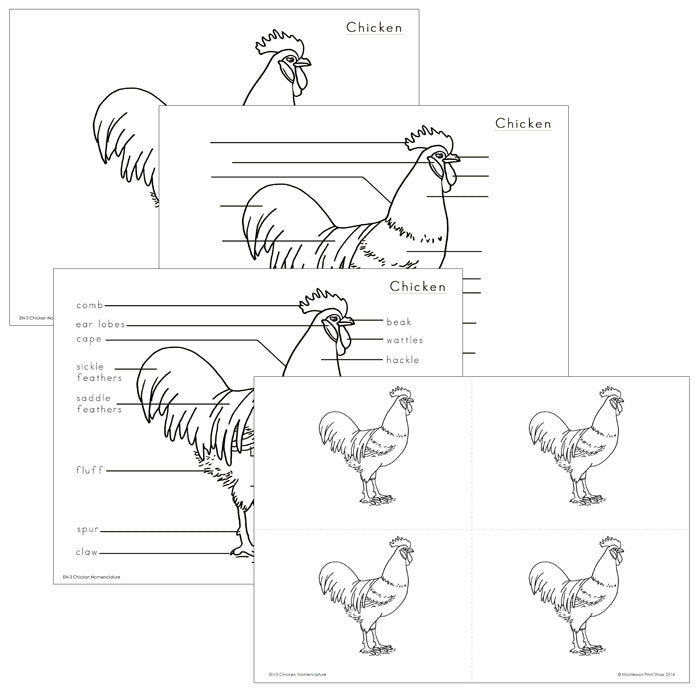 Elementary Chicken Nomenclature - Montessori Print Shop