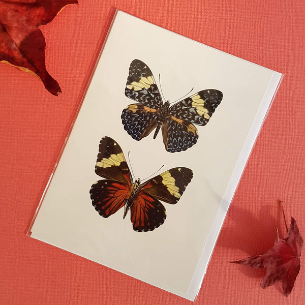 Liljebergs Macro Photography Greeting Card with Envelope Two Butterflies - Unik by Nature