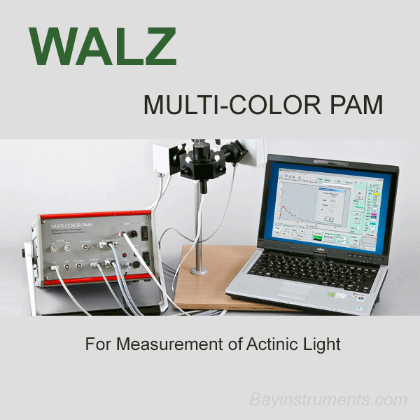 Walz MULTI-COLOR-PAM Fluorometer, Walz Fluorometers and Photosynthesis Equipment - Bay Instruments, LLC