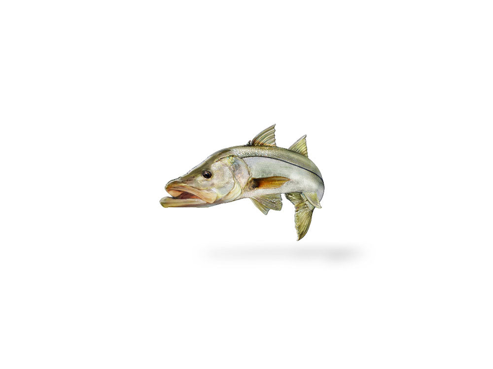 Jumping Snook Decal