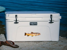 Brown Trout cooler decal