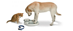 THE GROWING OBESITY EPIDEMIC IN DOGS AND CATS