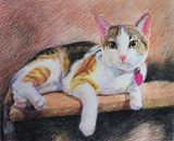 Colored pencil drawing of a calico cat.