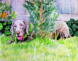 Colored pencil drawing of a dog in the yard.