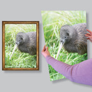 Giclee archival art print mid size poster printing from Rainbow Print, Christchurch