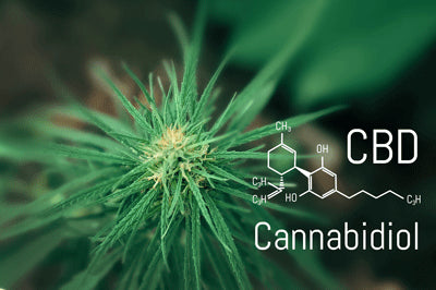 Hemp Leaf and Cannabidiol Formula