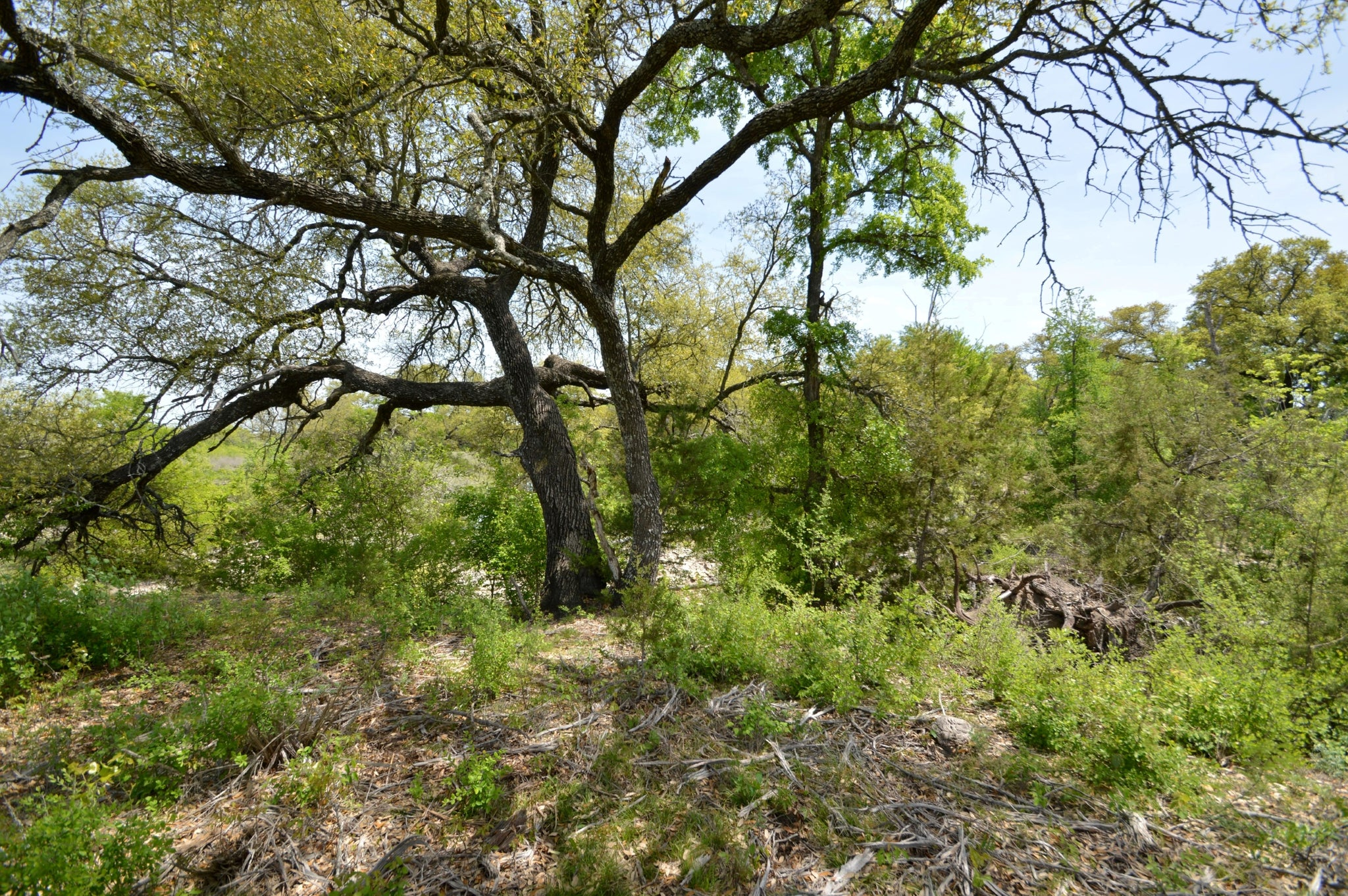 40+/- Acres on Patterson Creek! in Lampasas County Texas
