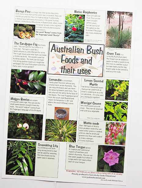 Aboriginal Bush Foods and their uses Poster